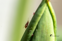 Insekten-4-van-8-2
