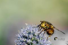 20190721-insekten-3-van-27
